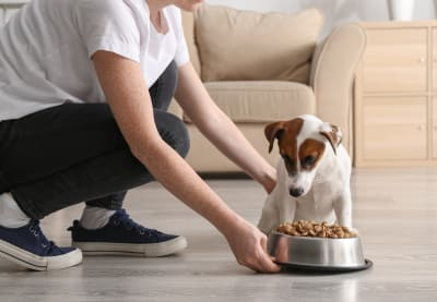 Best Food Small Dogs | Clemmons Vet